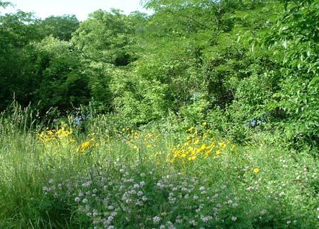 wildgarden