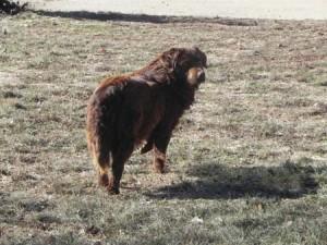 browndog2015